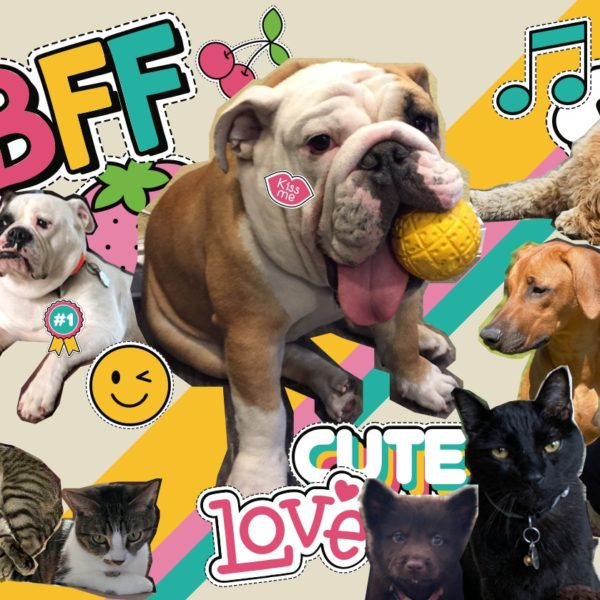 collage of dogs and cats